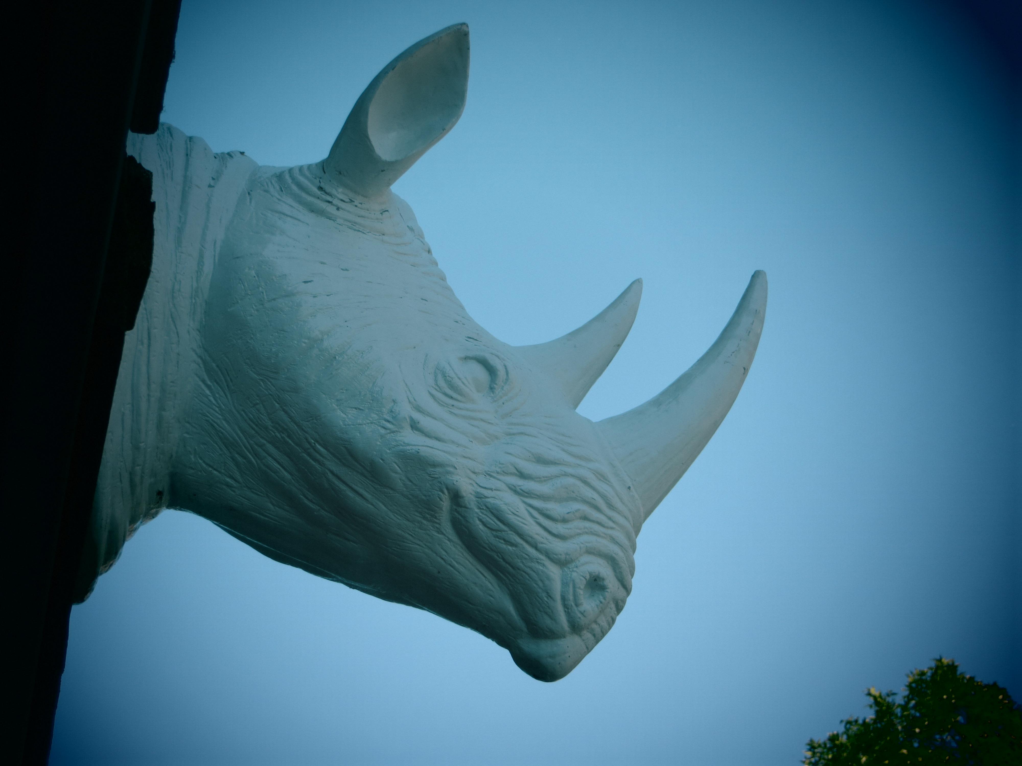 tête de rhinocéros sur le plateau Montroyal - Montréal