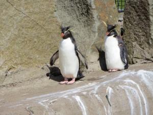 pingouins au zoo d'Edimbourg