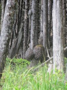 arbre étranges au bord du Pacifique - Olympic Park
