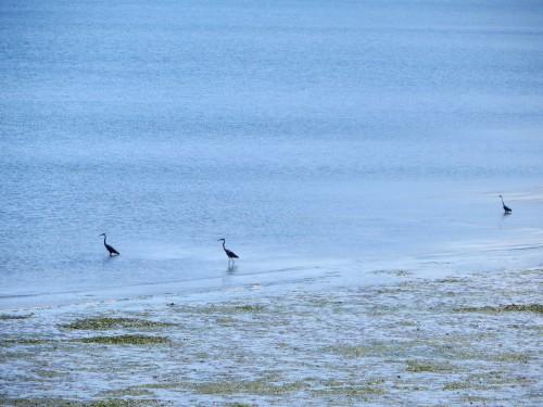 oiseaux à Anacortes