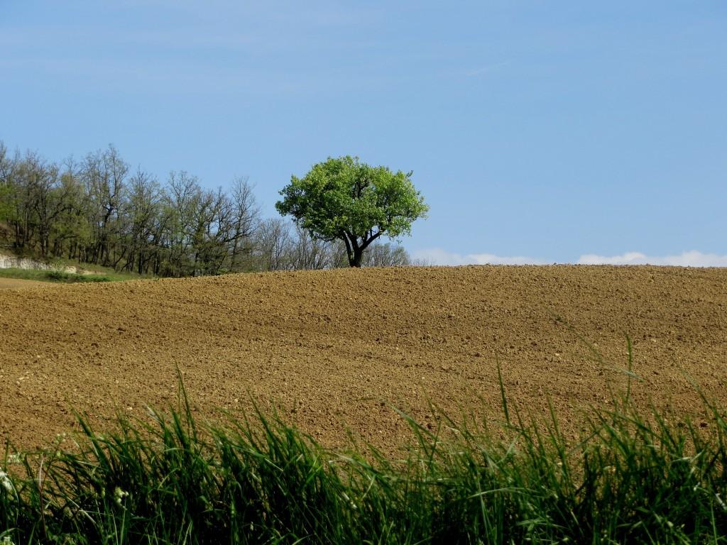 paysage Lot-et-Garonne