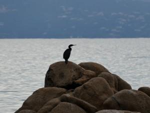 oiseau sur une plage d'Ajaccio