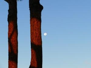 rayon du soleil sur un tronc d'arbre