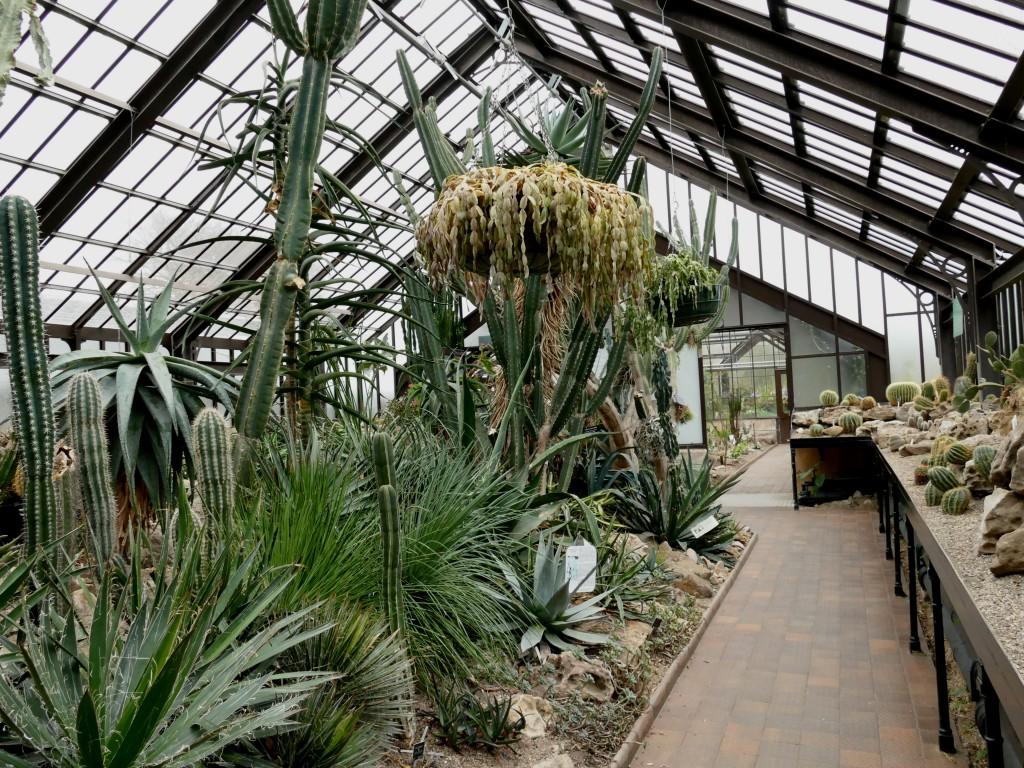cactus dans le jardin botanique de Glasgow
