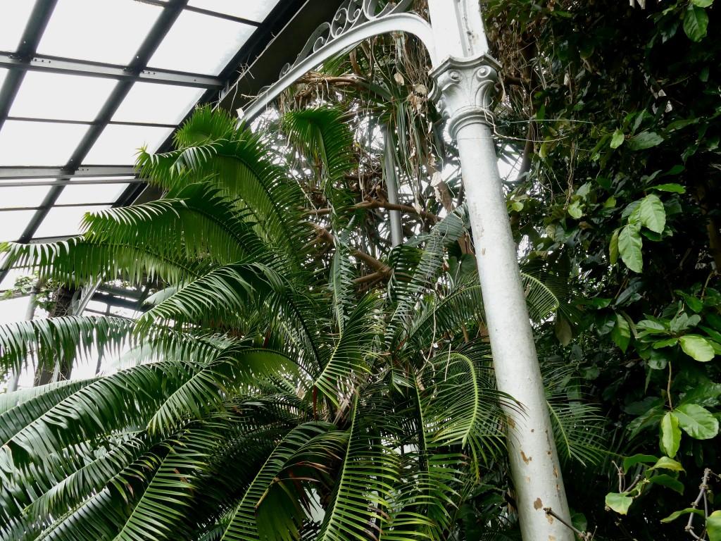 jungle dans le jardin botanique de Glasgow