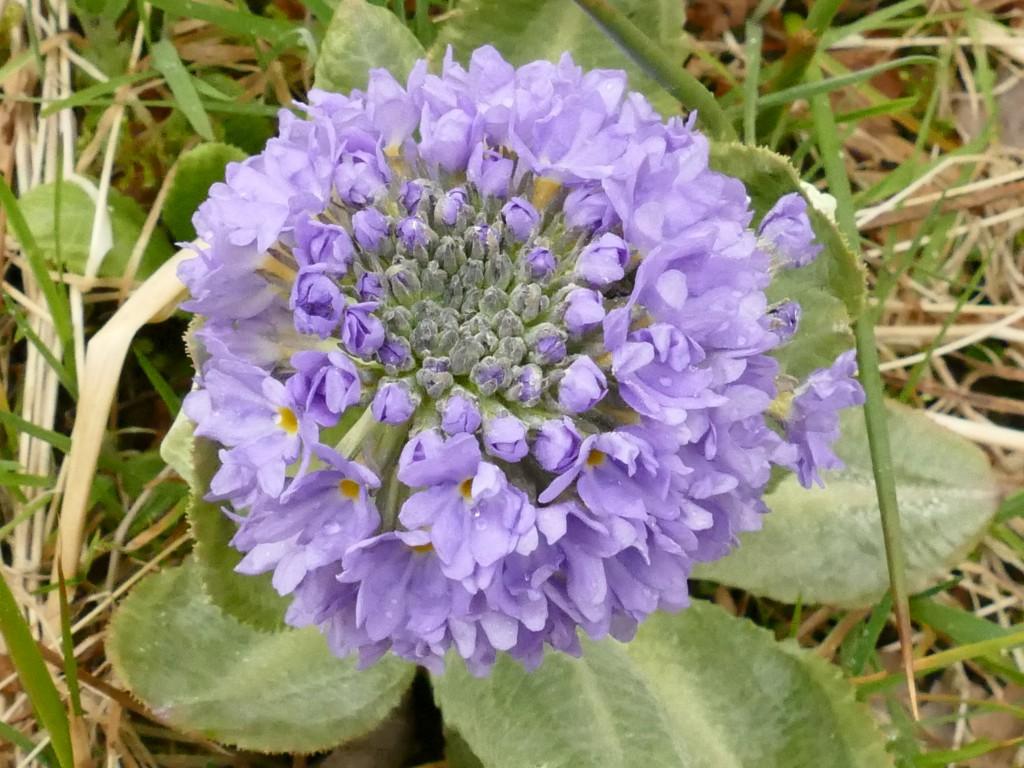 fleur au bord de La River Fillan - Ecosse