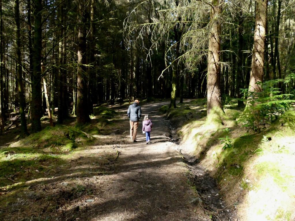 forêt autour du Lochan Glencoe (Ecosse)