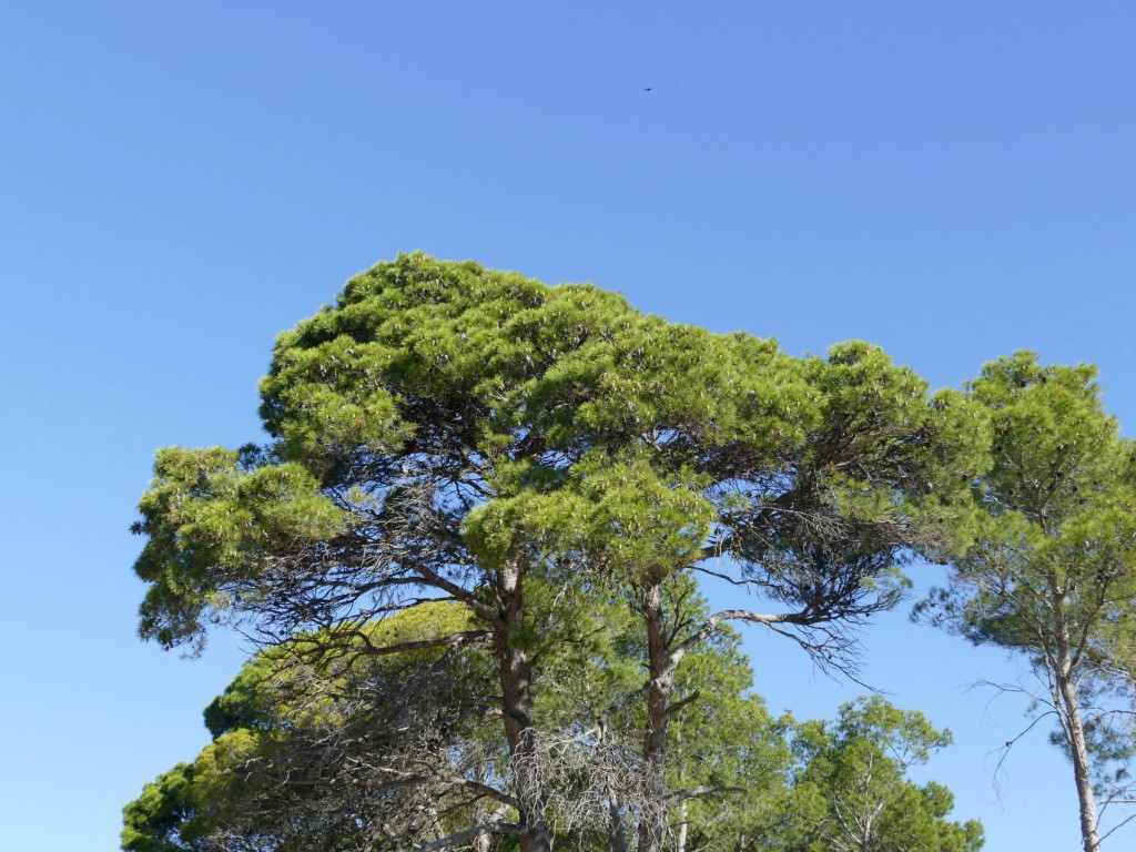 arbre - sentier sur la presqu'île de Sainte-Lucie dans l'Aude