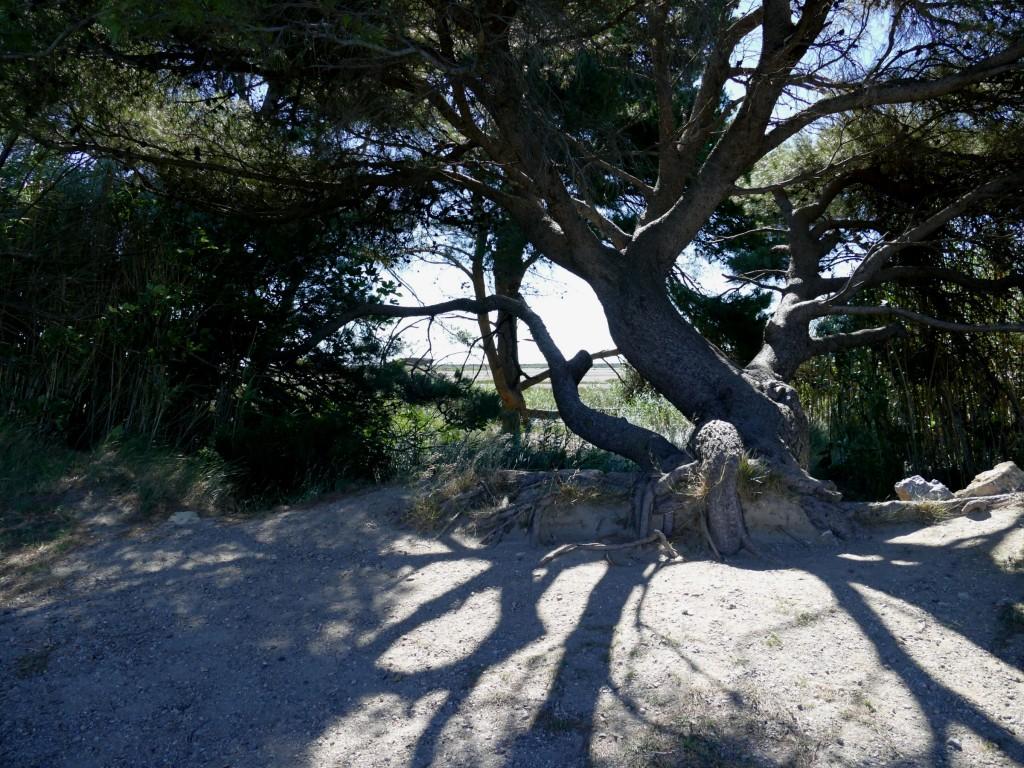 la presqu'île de Sainte-Lucie dans l'Aude