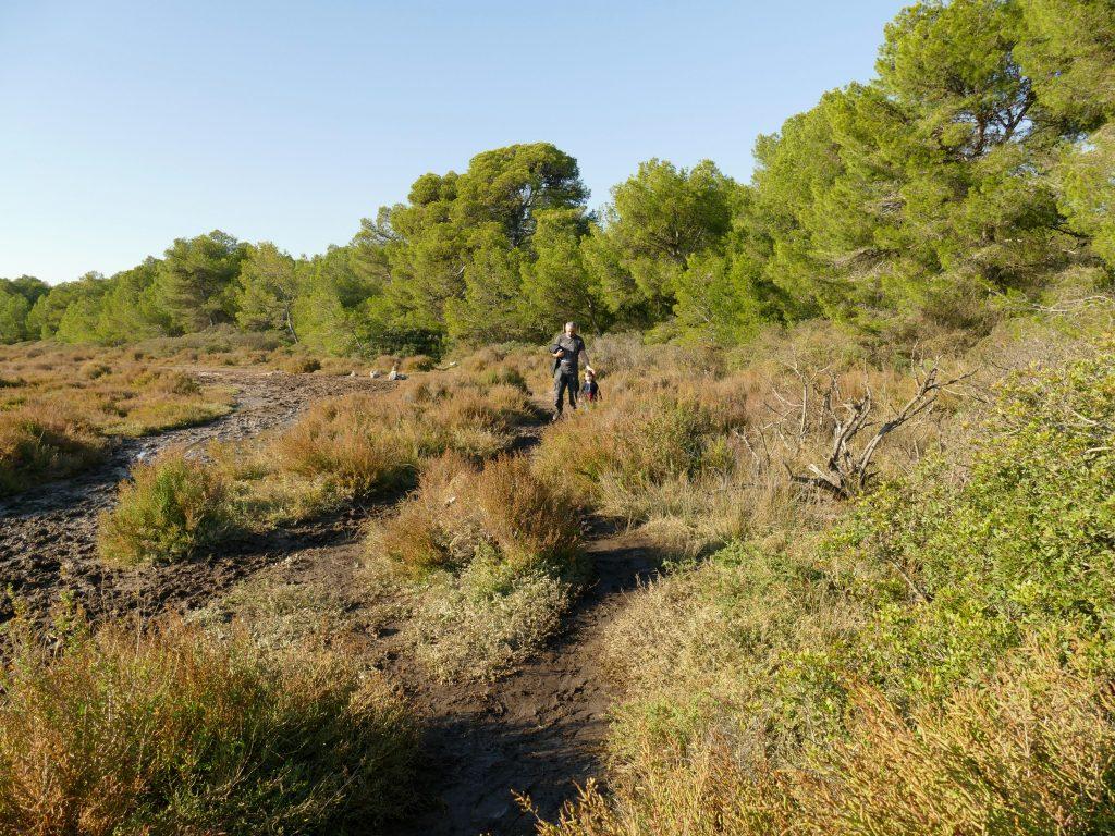 paysage des Aresquiers - Hérault