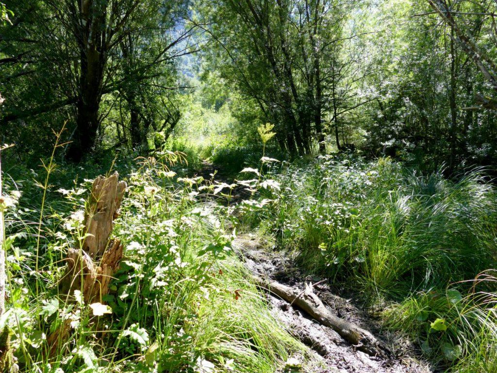 chemin au bord du lac de bohinj