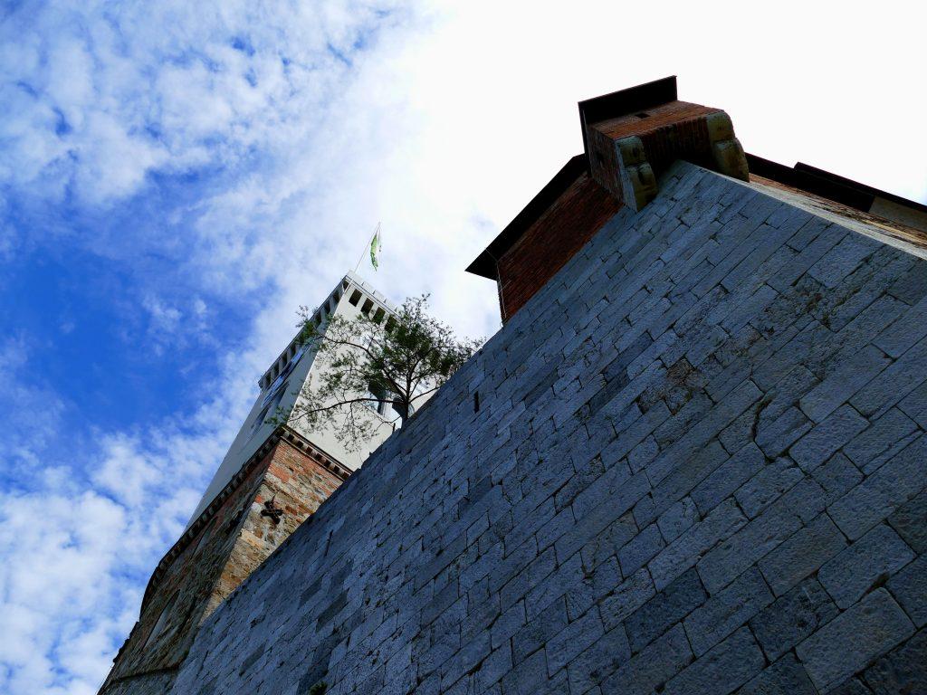 Arbre poussant sur un mur du château de Ljubljana