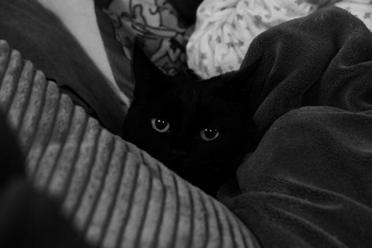 char noir emmitouflé dans le canapé