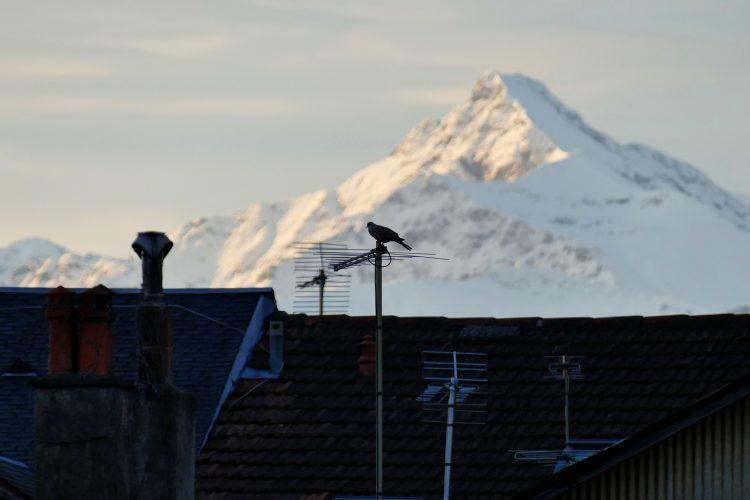oiseau sur antenne telé devant les Pyrénées