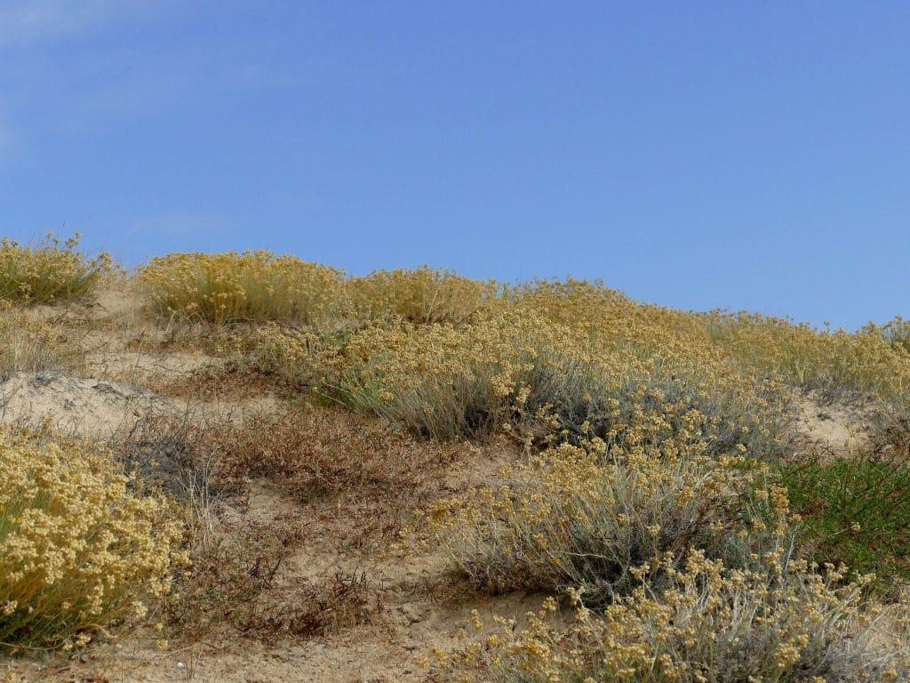 dune de Vieux-boucau