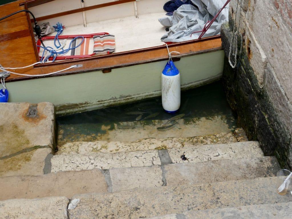 poissons dans un canal de Venise