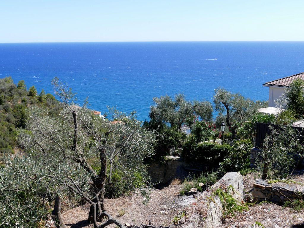 Champ d'oliviers face à la Méditéranée - Cervo / Liguria