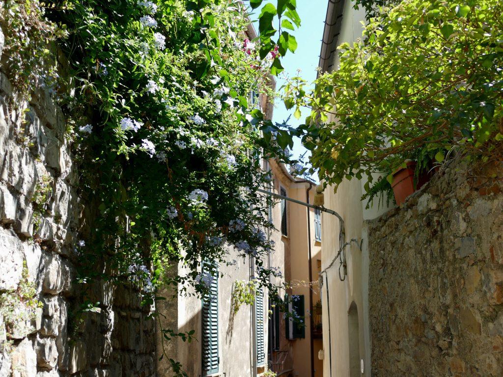 fleurs dans les ruelles de Cervo - Liguria