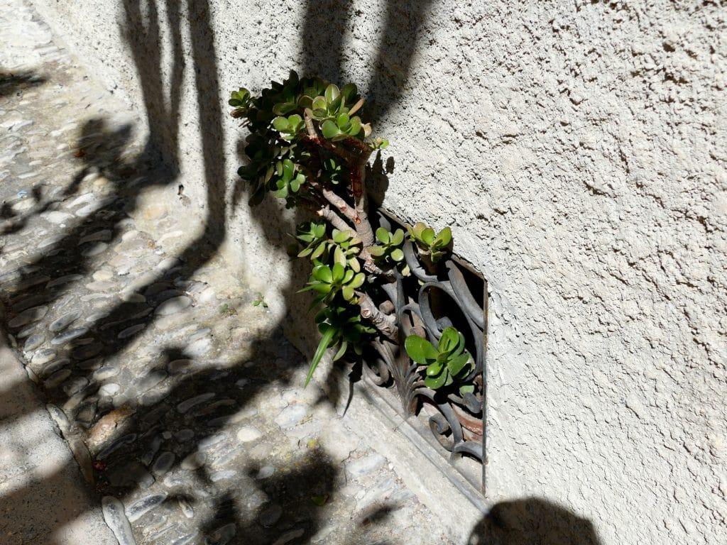 plante qui sort d'une aération