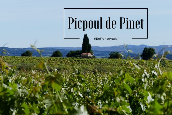 Terroir Picpoul de Pinet