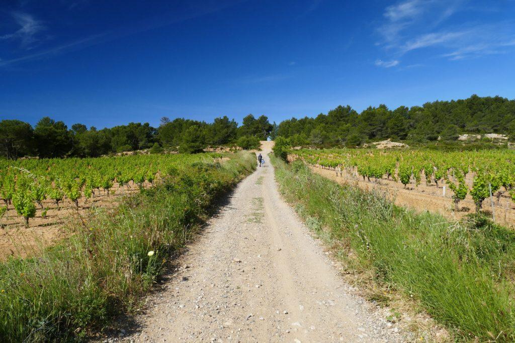 Dans les vignes du Picpol de Pinet