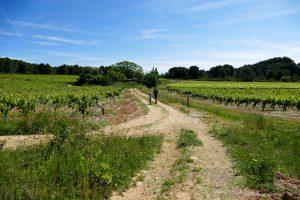 terroir Picpoul de Pinet - Hérault
