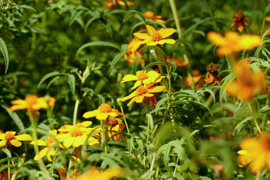 fleurs dans le parc Olibius Riquier - Hyères