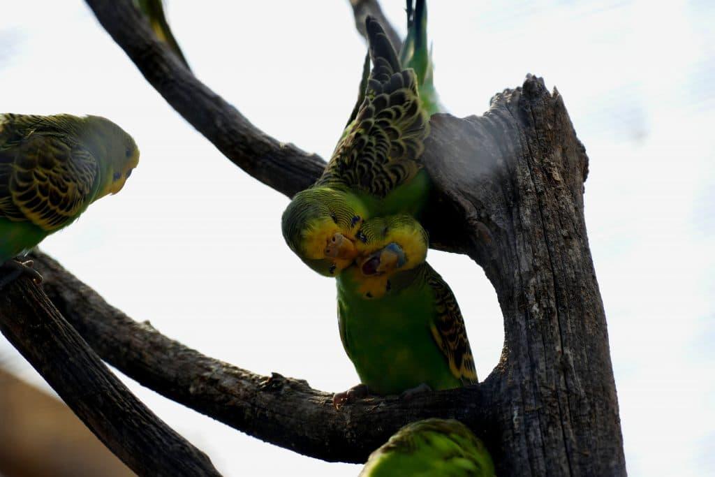 oiseaux fleurs dans le parc Olibius Riquier - Hyères