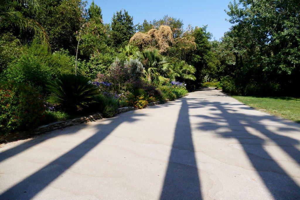 ombres de palmiers fleurs dans le parc Olibius Riquier - Hyères