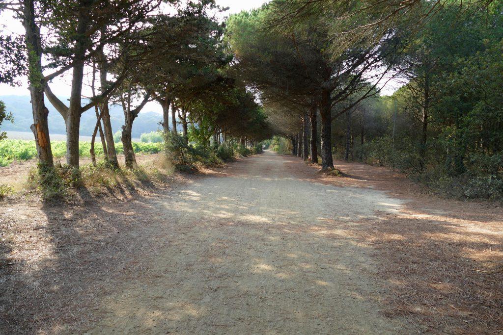 chemin sur Porquerolles