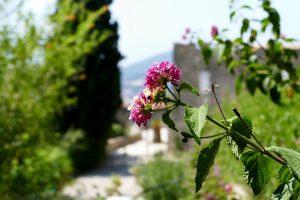 Fleur dans le parc Sainte-Claire -Hyère