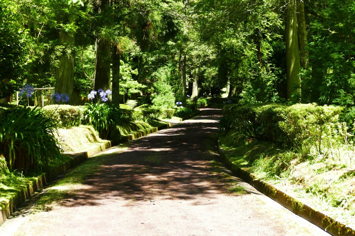 Allée d'un parc floral - Sao Miguel (Açores)