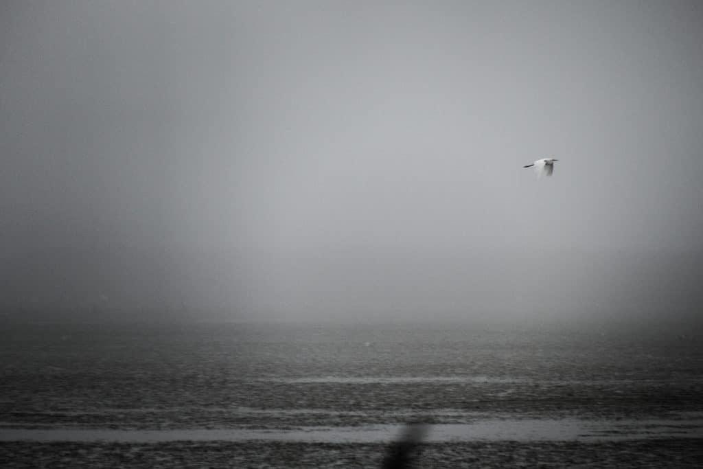 Réserve de Bagnas dans la brume