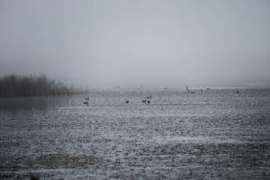 oiseaux dans la brume - Réserve de Bagnas