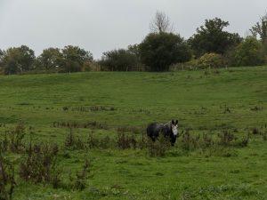 cheval- PNR Perche