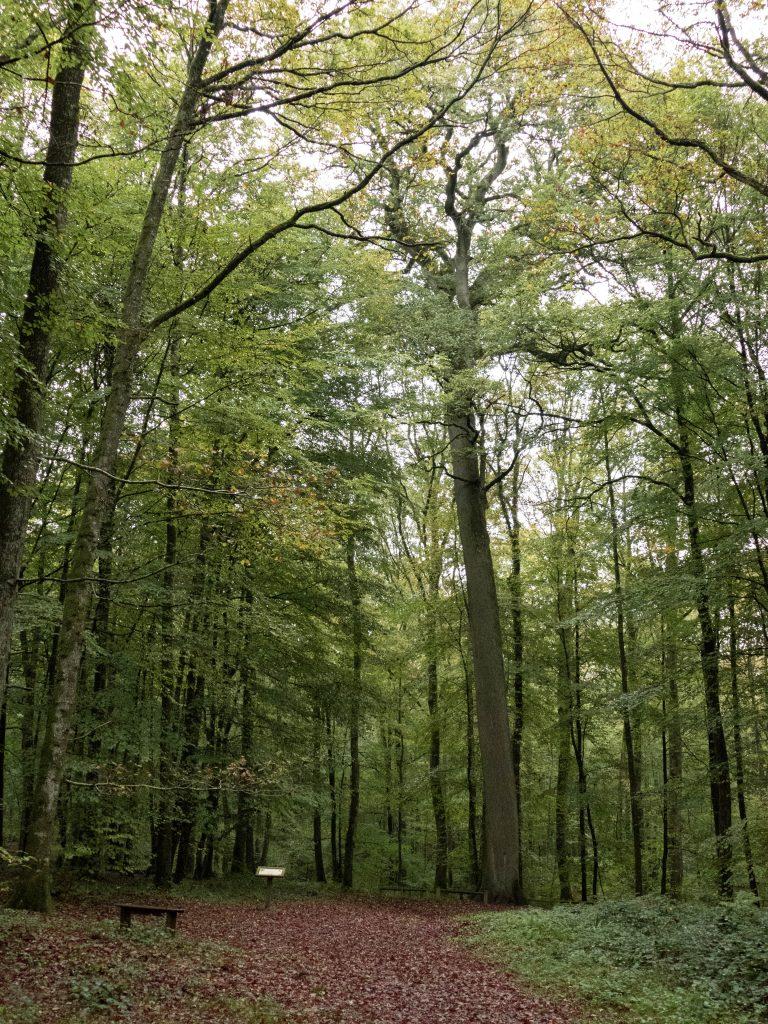 forêt de Bellême dans le Perche