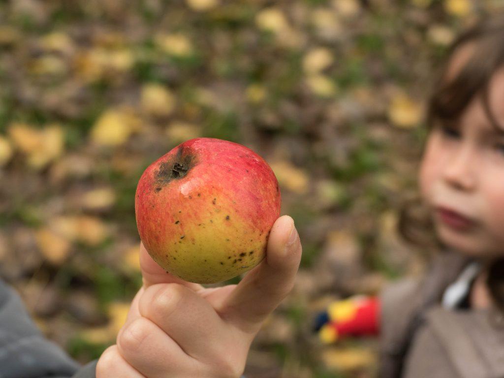 pomme du moulin de Gémages - orne