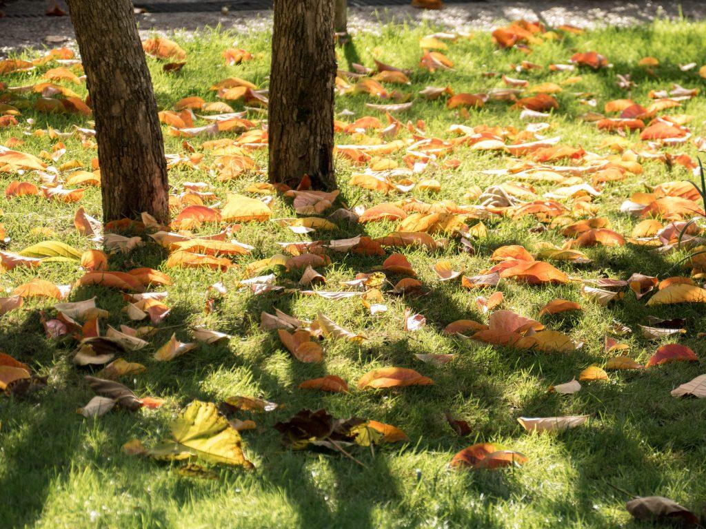fauilles morts dans les jardins de Giverny - automne