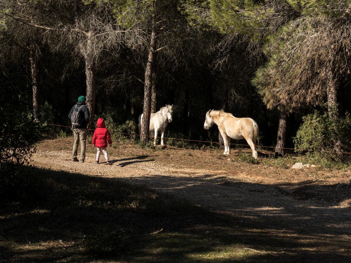 chevaux blancs - randonnée cit'art de Vic La Gardiole