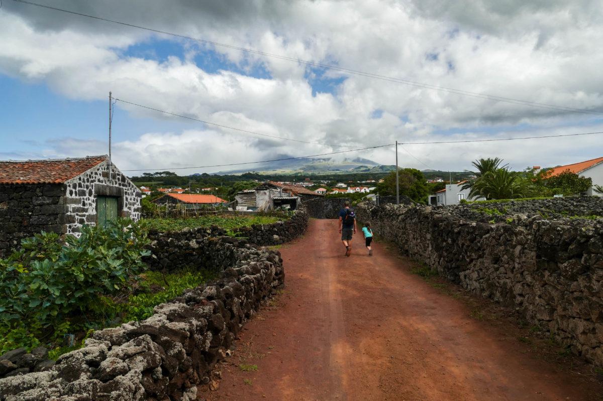 vignes de Criacao Velha sur Pico aux Açores
