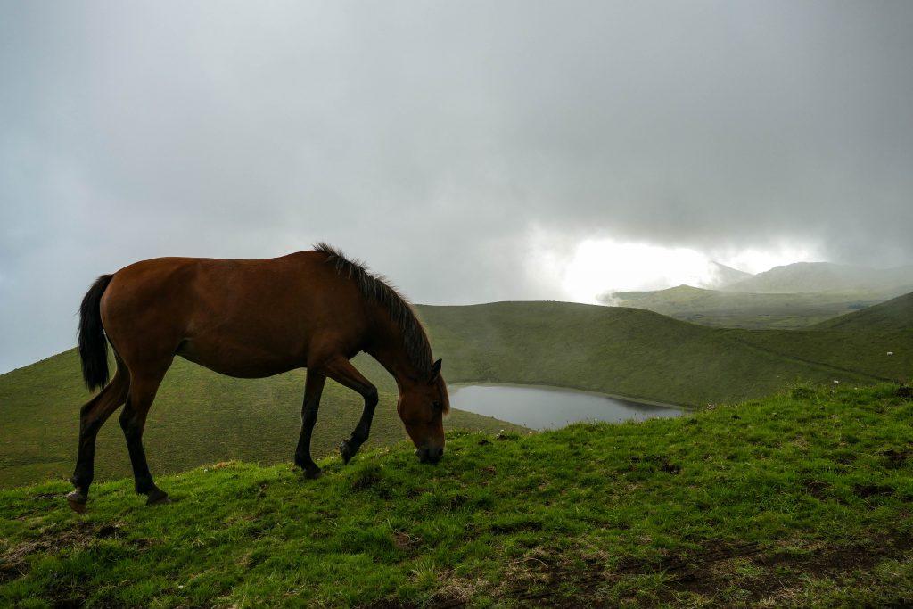 lagoa Rosada sur Pico aux Açores