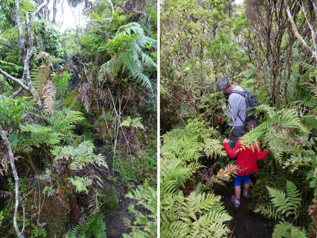 En rando dans la boue sur Pico (Açores)