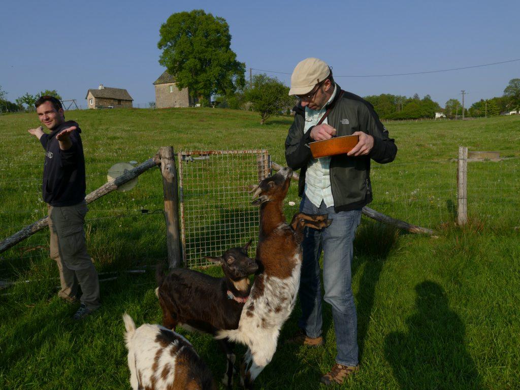 blogueurs avec des chèvres en Correze