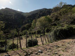 jardins à Rosse- Corse
