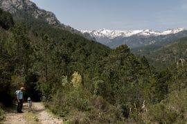 sentier Mare e Montu Livantinu - Ghisoni