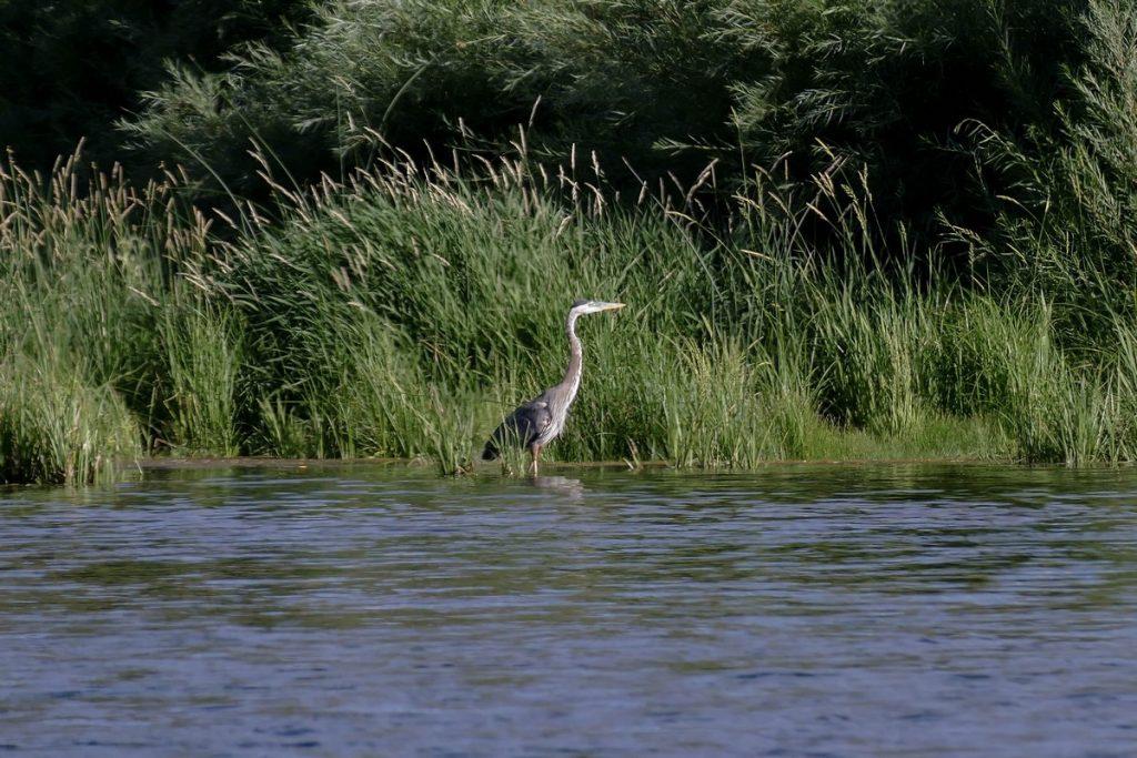 oiseau au bord de la Green River