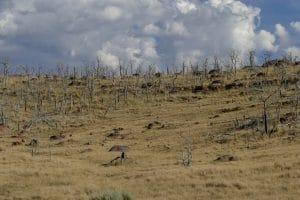 arbres cramoisis - Flaming Gorge
