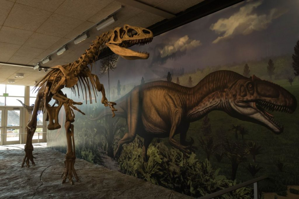 squelette de dinosaure dans le Quarry Exhibit Hall - Dinosaur National Monument