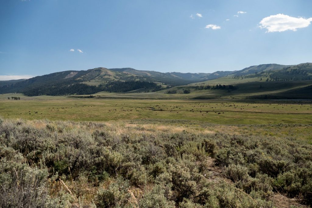 lamar valley dans le yellowstone