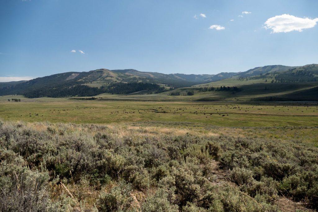 lamar valley dans le yellowstone